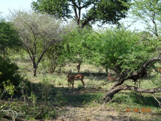 Parcul National Kruger