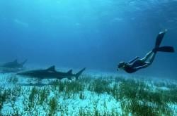 Croaziere Bahamas