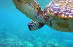 Croaziere Hawaii